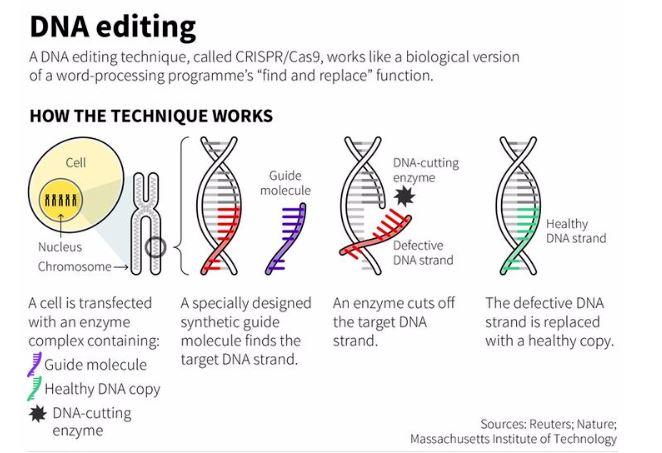 DNA Editing